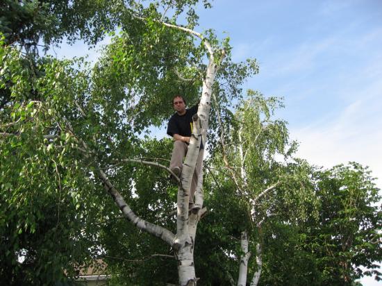 На дереве 20090617