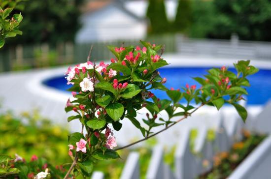 backyard 20110609 - 1