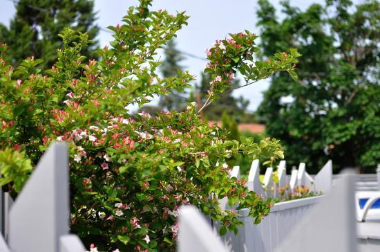 backyard 20110609 - 2