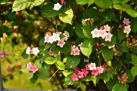 backyard 20110609 - 3