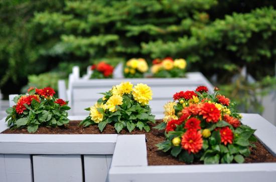 backyard 20110609 - 4