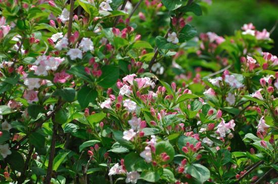 backyard 20110609 - 6