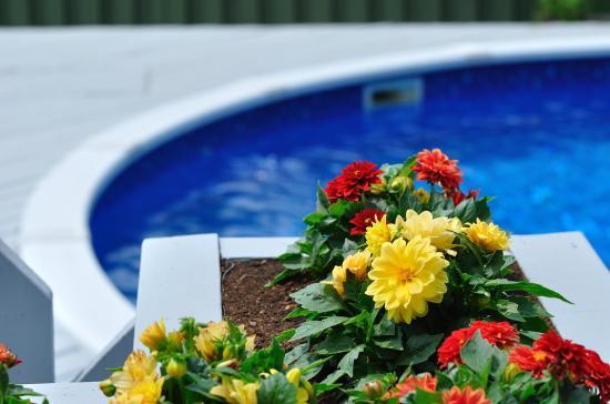 backyard 20110609 - 7