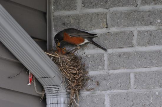 backyard 20110609 - 8