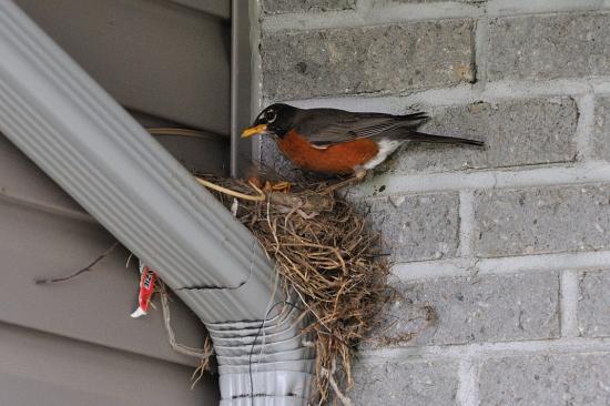 backyard 20110609 - 10