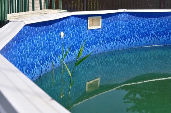 Камыш сковзь дно бассейна
