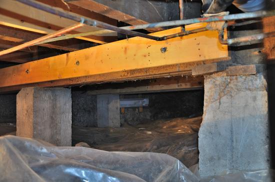 Fungus, basement - Montreal - 2