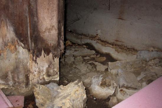 Fungus, basement - Montreal - 6