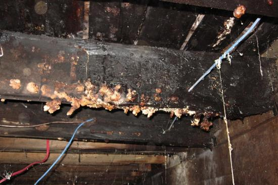 Fungus, basement - Montreal - 11