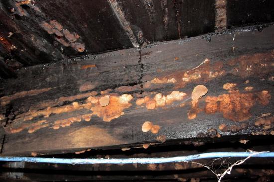 Fungus, basement - Montreal - 12