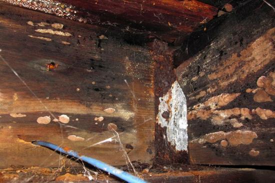 Fungus, basement - Montreal - 14