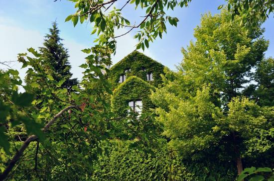 Зелёный дом в Монреале