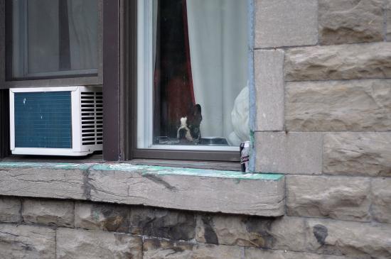 Лето, жара, кондиционер в Монреале 2012 - 13
