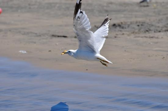 Wasaga Beach 20120806 - 19