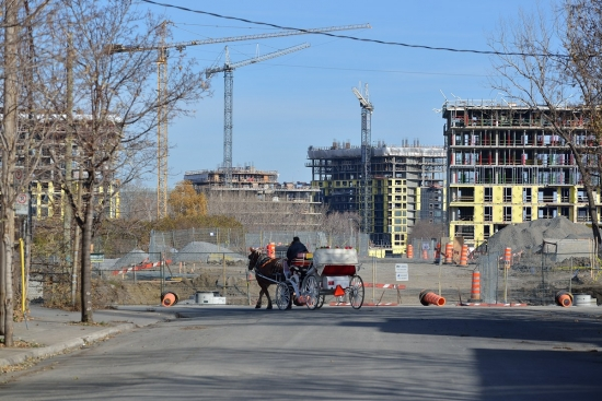Griffintown, Montreal, Horses 2012-11-18 - 1
