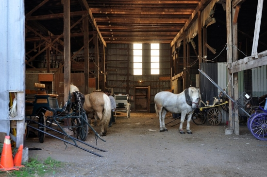 Griffintown, Montreal, Horses and Stables 2012-11-18 - 4