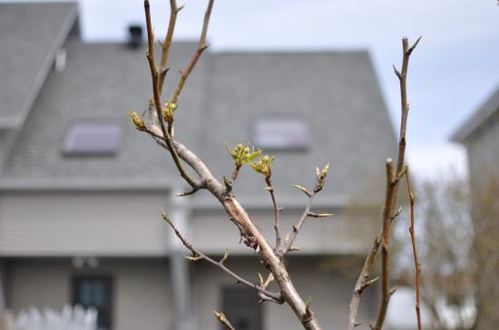 Недвижимость в    Монреале. Весна. 15 апреля 2010