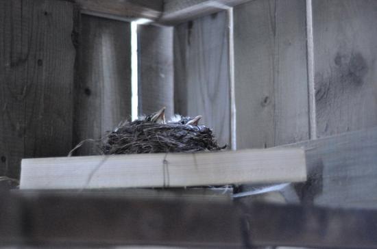 Птицы под патио   20100524-29-5