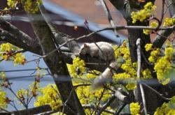 Белка альбинос на дереве