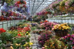 Парник с   цветами