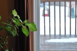 Окна в доме -3