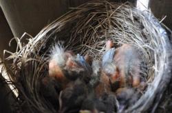 Птицы под патио 20100524-29-1