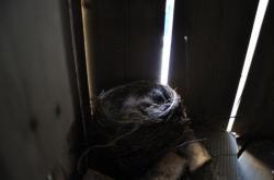 Птицы под патио 20100524-29-2