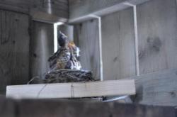 Птицы под патио 20100524-29-6