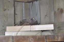 Птицы под патио  20100524-29-8