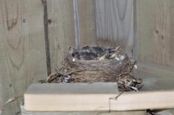 Птицы под патио 20100524-29-10