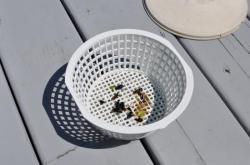Фильтр-корзинка с жуками