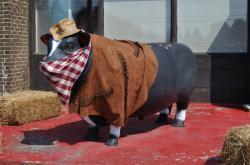 Корова в  Chateauguay 20100617-2