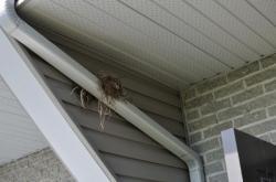 Гнездо в 2010
