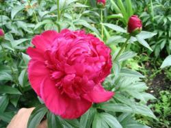 Анины цветы - 2