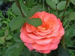 Анины цветы - 3