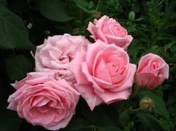 Анины цветы - 4
