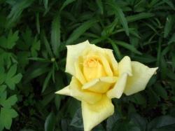 Анины цветы - 5