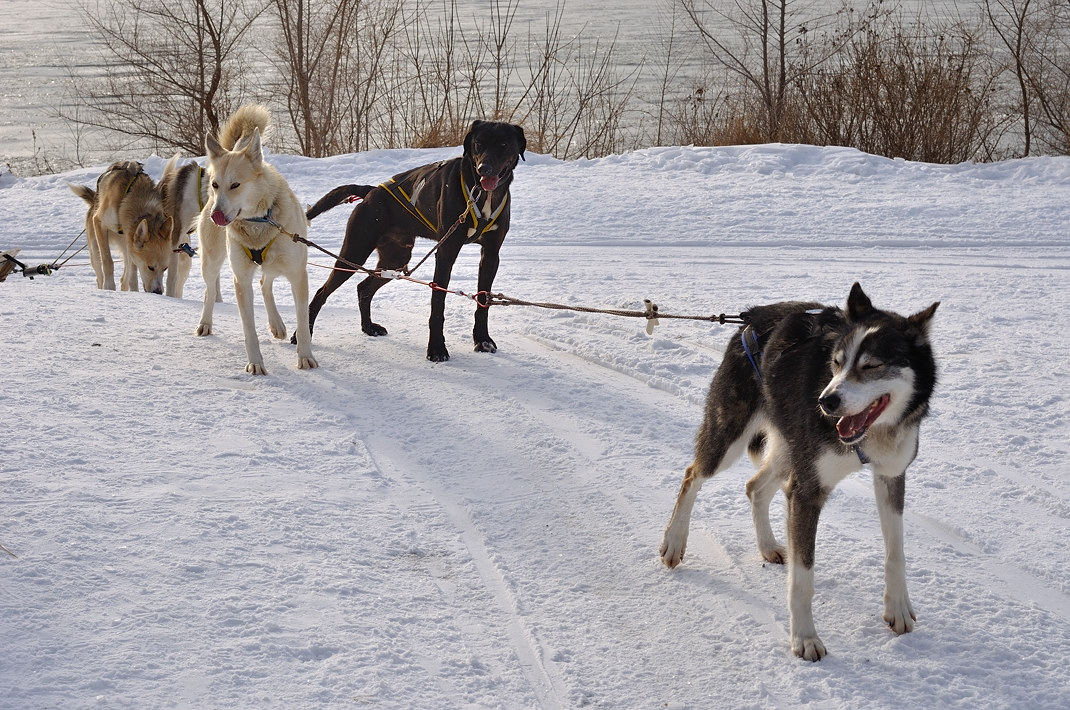Fête des neiges de Montréal au Parc Jean-Drapeau, Snow Village 2013-01-20 - 70